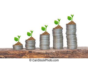 Árboles creciendo en una secuencia de germinación en pilas de monedas