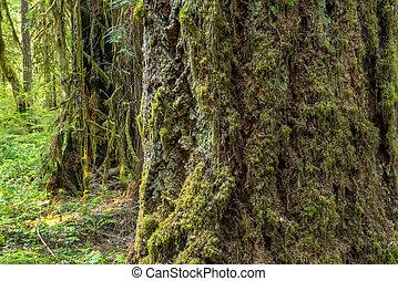 Árboles cubiertos de musgo en el bosque de Oregon