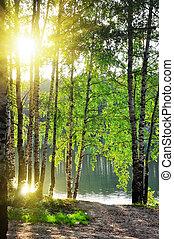 Árboles de arco en un bosque de verano
