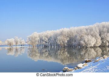 Árboles de invierno cubiertos de escarcha en el río Danubio