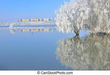 Árboles de invierno helados