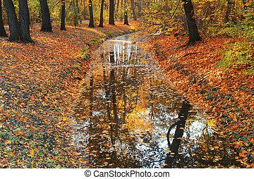 Árboles de otoño reflejados en el río