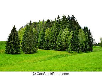 Árboles en campo verde.