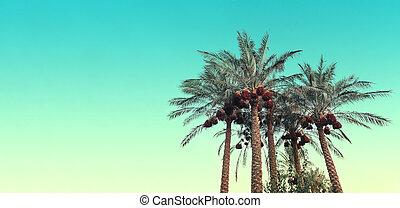 árboles, fondo cielo, azul, contra, palma