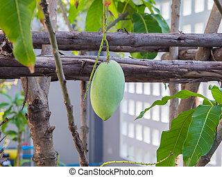 árboles, hojas, ramas, mango