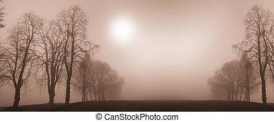 árboles, invierno