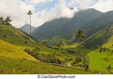 árboles, vax, palma, cocora, colombia, valle