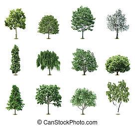 árboles., vector, conjunto