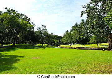 Árboles verdes en el parque