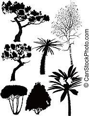 Árboles y plantas abedules
