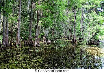 Área del pantano