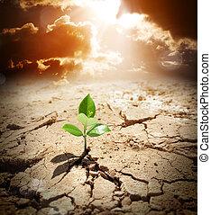 árido, tierra, warming, clima, planta