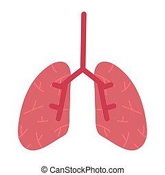 órgano, humano, pulmones