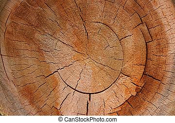 -, sección, árbol, cruz, timbre de crecimiento, circular