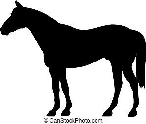 -, silueta, vector, contorno, elegante, multa, caballo, arriba, negro, erección, sementales