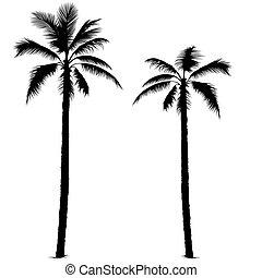 1, silueta, palmera