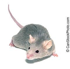 3, ratón