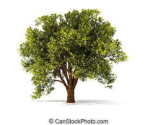 3D árbol de verano