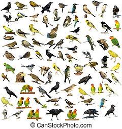 81 fotografías de aves aisladas