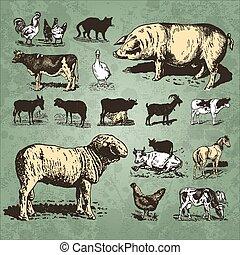 Añejas de cultivo de animales (vector)