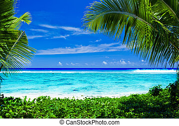 abandonado, árboles, encuadrado, tropical, escamotee playa