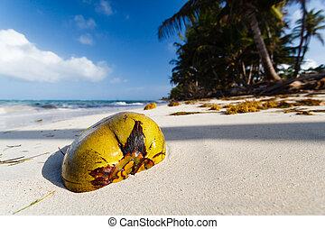 abandonado, coco, playa
