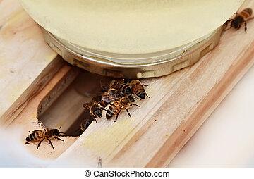 abeja, alimentador