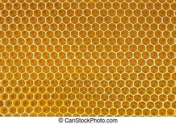 abeja miel, panal