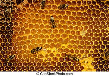 abejas, trabajo, panal