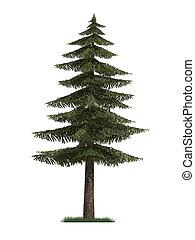 abeto, modelo, árbol, 3d