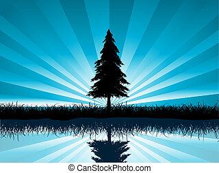 abeto, solitario, árbol