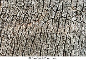 Abstracción textura de fondo de corteza tropical