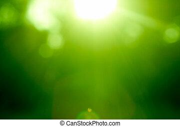 Abstracto bosque verde desfocado