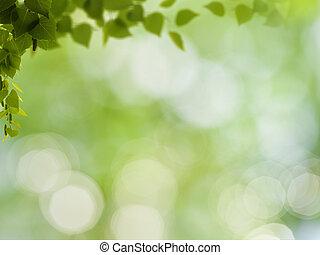 Abstraer antecedentes naturales con follaje de abedul y bokeh de belleza