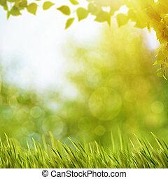 Abstraer antecedentes naturales con follaje de verano y soleada brillante
