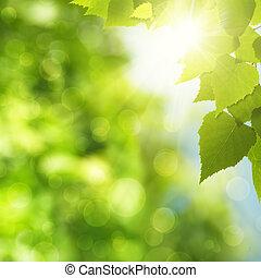 Abstraer antecedentes naturales con follaje verde y rayo de sol