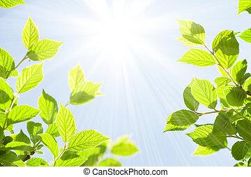 Abstraer el soleado fondo de verano bokeh con hojas verdes