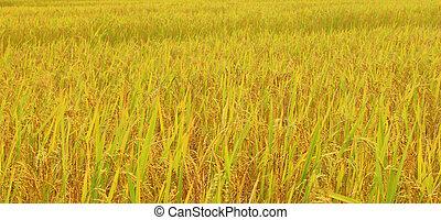 Abstraer los campos de cebada