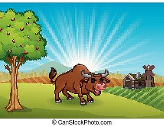Actividad de toros en la granja por la mañana