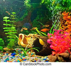 Acuarios peces de diferentes especies