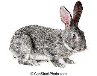 adorable, conejo