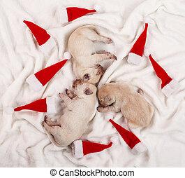 Adorables cachorros de labrador amarillo durmiendo entre pequeños sombreros de Navidad