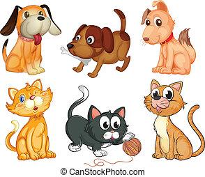 Adorables mascotas