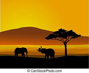 Africa de la vida salvaje