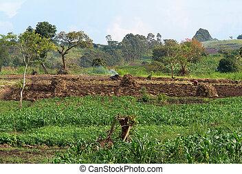 Agricultura cerca de las montañas de Rwenzori