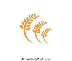 Agricultura de trigo Logo Template, saludable logotipo vector icono