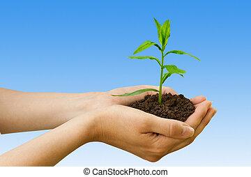 Agricultura. Planta en una mano