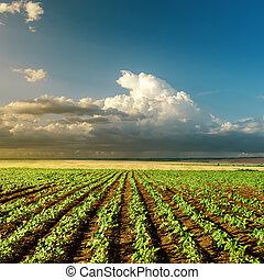 agricultura, verde, campo puesta sol
