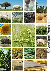 Agricultura y cría de animales.
