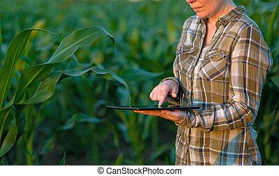 Agronomist con tablet en el campo de maíz